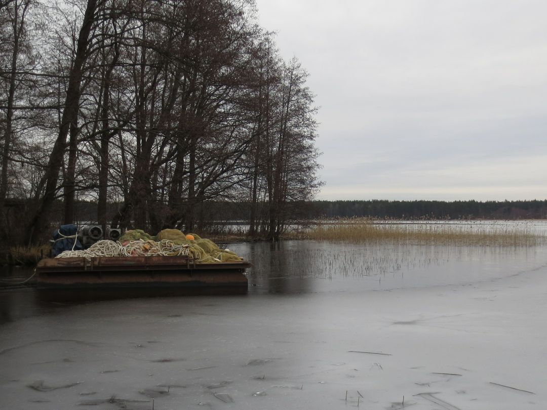 Pravdinskoe lake: description, fishing, photo